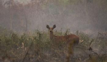 Trata-se da maior queimada já registrada no Pantanal