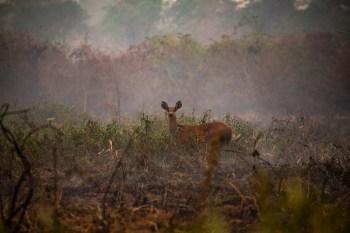 Segundo especialistas, caatinga e cerrado são os biomas mais afetados por incêndios florestais em 2021