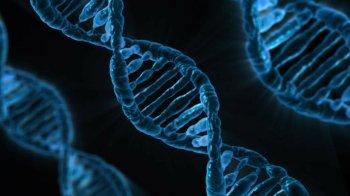 Dupla de cientistas venceu o Nobel de Química pelo desenvolvimento da ferramenta de 'edição genética'