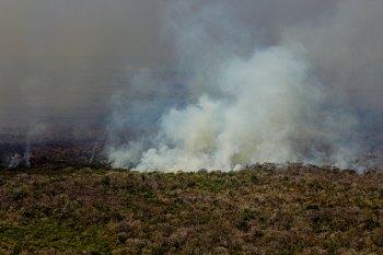 A área registrou, até o dia 11 de novembro, 21.752 focos de incêndio, que indicam pontos de queimadas
