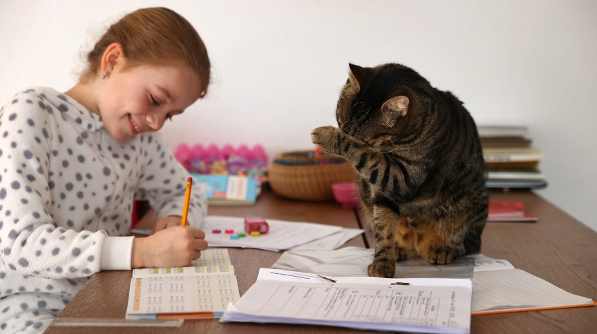 Criança estuda em casa para evitar transmissão do coronavírus acompanhada de seu gato em Jugenheim, Alemanha