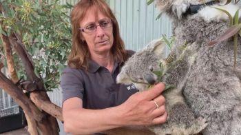 População de coalas caiu para menos de 58 mil neste ano – eram mais de 80 mil em 2018, segundo dados da Australian Koala Foundation