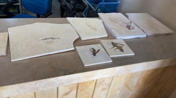 Polícia Federal tenta desarticular rede de tráfico de fósseis raros encontrados na Chapada do Araripe, no Sul do Ceará
