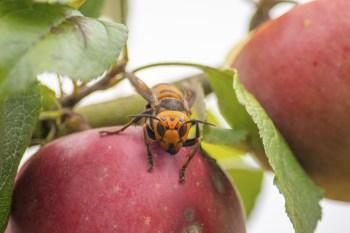 Ele foi encontrado por entomologistas no buraco de uma árvore em uma propriedade privada