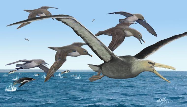 Representação artística de albatrozes antigos perseguindo um pelagornitídeo (com seu temível bico dentado) enquanto pinguins brincam nos oceanos, numa Antártica de 50 milhões de anos.