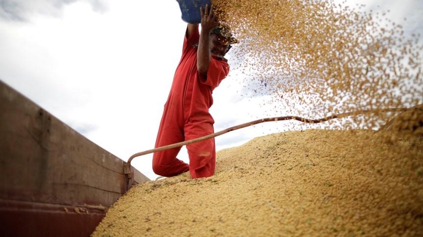 Homem trabalhando com grãos: SLC pretende aumentar área de plantio
