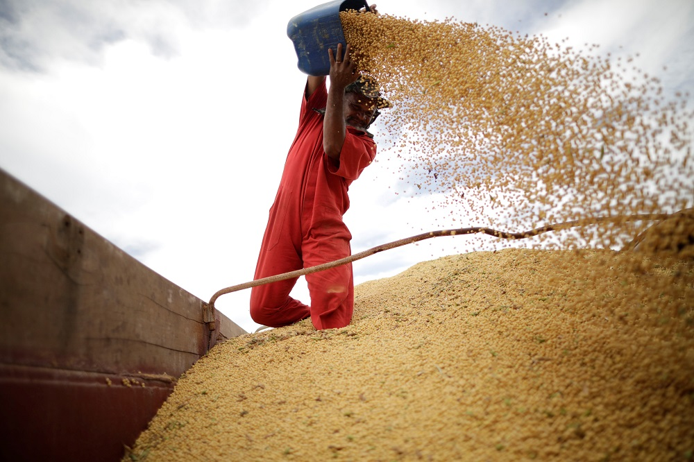 Homem trabalhando soja