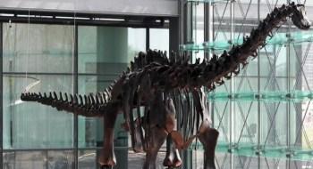 Fósseis encontrados na Patagônia lançam nova luz sobre constituição desses gigantes pré-históricos