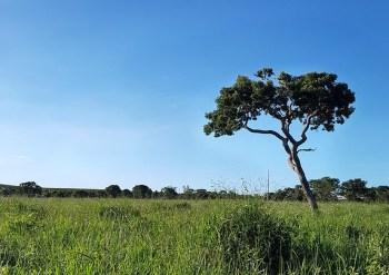 O bioma, segundo maior da América do Sul, já registrou redução de 48,4% nas últimas décadas e possui a maior taxa de desmatamento entre os demais, segundo o Ibama