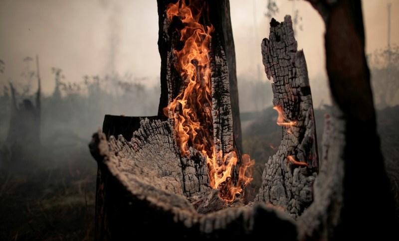 Tronco de árvore em chamas na Amazônia