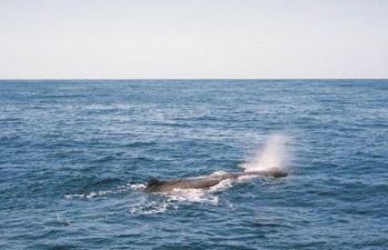 Cerca de 100 baleias-piloto e golfinhos-nariz-de-garrafa morreram em um encalhe em massa nas remotas ilhas Chatham, pertencentes à Nova Zelândia