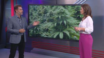 Neurocirurgião Fernando Gomes comentou a nova classificação da cannabis feita pela Organização das Nações Unidas