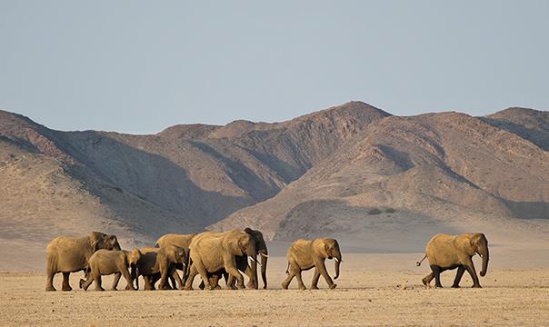 Elefantes na Namíbia