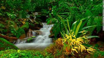 Pesquisadores descobriram a víbora fer-de-lance da montanha, a cobra-bandeira boliviana e a rã anã, bem como espécies de orquídeas e borboletas