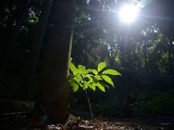 Dados foram divulgados pela associação Advacing Earth and Space Science; reflorestamento e proteção de florestas são as soluções indicadas por pesquisa