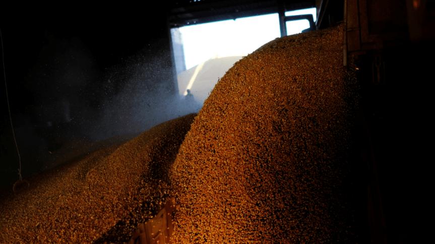 Caminhão descarrega milho perto de Sorriso, em Mato Grosso.