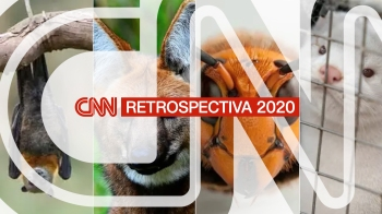 Em meio à pandemia da Covid-19, convulsões políticas nacionais e mundiais e desastres naturais, os animais ainda conseguiram roubar a cena várias vezes no ano