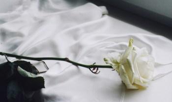 Tradicional ritual do banho de mar e pular ondas pode ser substituído por banho com pétalas de 7 rosas brancas