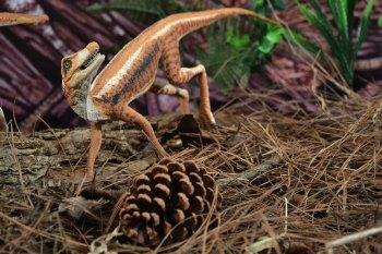 Animal pré-histórico raro que é considerado a última etapa anterior evolutiva à origem dos pterossauros