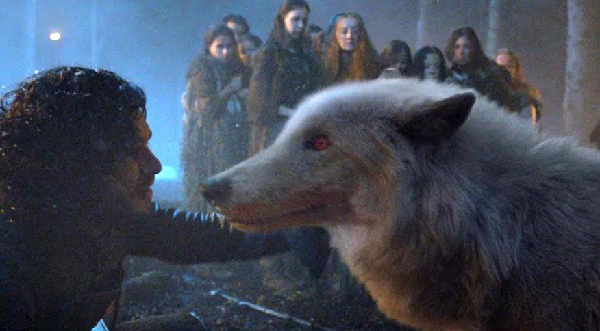 Lobos gigantes eram alguns dos animais de estimação exóticos da série Game Of Thrones