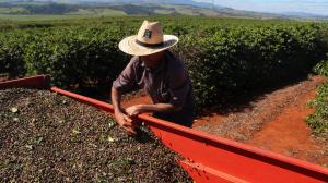 Produção agrícola em 2020 chega a R$ 470,5 bilhões e bate recorde