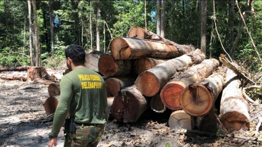 Imagens de um acampamento de desmatamento ilegal encontrado durante as diligências de investigação