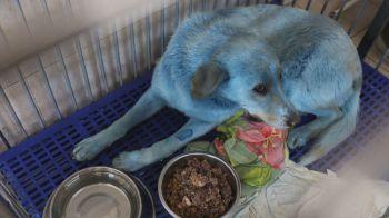 Cor anormal do pelo dos animais chamou a atenção dos moradores locais, que acionaram as autoridades