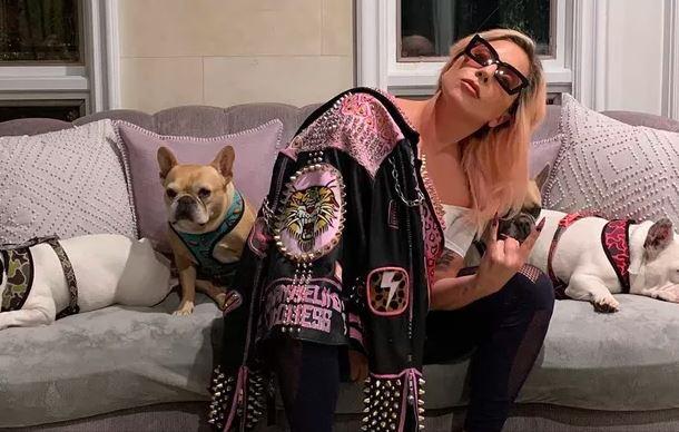 Foto de Lady Gaga com seus cães postada nas redes sociais da cantora