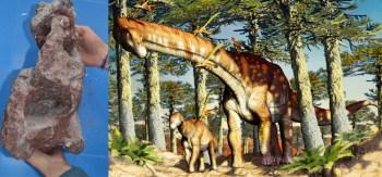 Fóssil localizado no sul da província de Neuquén indica que espécie viveu há 140 milhões de anos