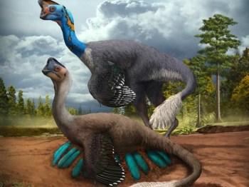 Descoberta do espécime de 70 milhões de anos ocorreu no sul da China; cientistas também documentaram 'pedras do estômago' pela 1ª vez em oviraptorossauro