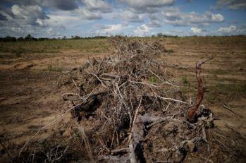 A produtora de grãos e oleaginosas SLC Agrícola, que vende para a Bunge e outras tradings, foi a responsável pela maior parte do desmatamento