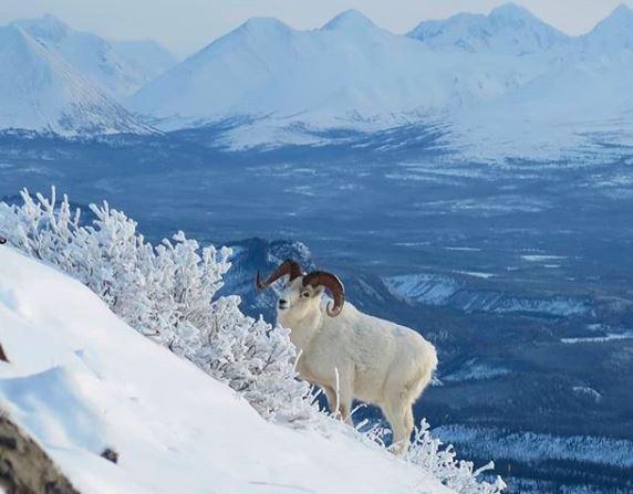 Parque Nacional Denali, no Alasca, onde Christopher McCandless morreu na história retratada no livro e filme 'Na Natureza Selvagem'