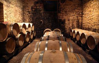 Geadas afetaram 80% dos vinhedos e podem causar queda de até 50% no faturamento em algumas regiões