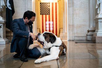 Após tragédias, presença dos cães ajuda a aliviar tensões e traz momentos de descontração entre profissionais de segurança, políticos e jornalistas