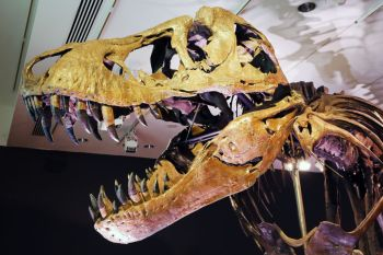 Estudo publicado na revista Science foi feito por paleontólogos da Universidade da Califórnia, Berkeley