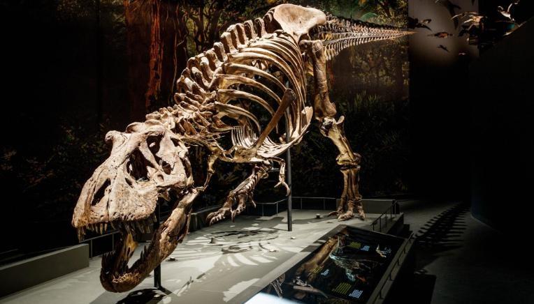 Ossada de Tiranossauro Rex