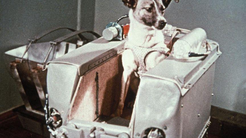 A cadela Laika, enviada ao espaço pela União Soviética