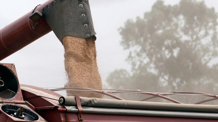 Insumos importados, como o trigo, sofrem reajustes com a alta do dólar