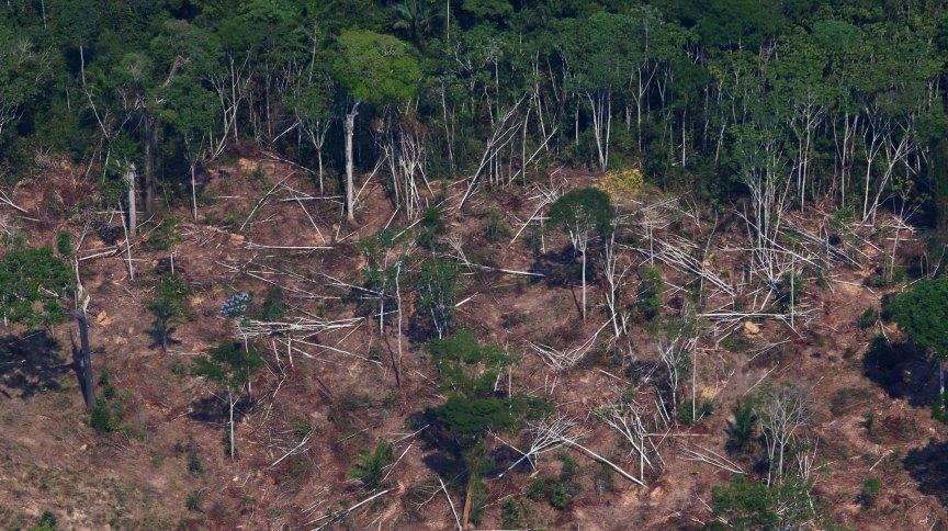 Área desmatada na Floresta Nacional do Jamanxim, no Pará