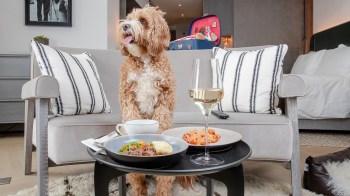 A partir de 17 de maio, 32 dos hotéis da rede Hilton que aceitam animais de estimação no Reino Unido e na Irlanda oferecerão o novo cardápio para os pets