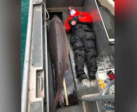 O peixe gigante, considerado fêmea, foi pescado no rio Detroit.