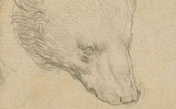"""A estimativa é que o desenho """"Head of a Bear"""" seja vendido por US$ 16,7 milhões"""