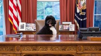 Bo se juntou à família Obama logo após Barack se eleger presidente e se mudar para a Casa Branca