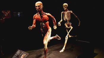 Cadáveres preservados foram colocados em diversas situações para similar movimentos reais do corpo