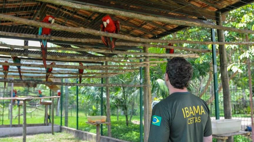 Funcionário do Ibama
