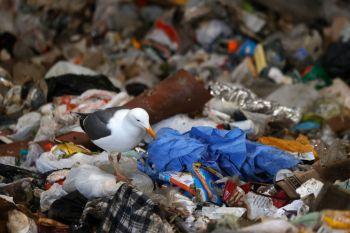 Além disso, o relatório disse que quase 60% do financiamento comercial para a indústria de plástico de uso único vem de 20 bancos globais