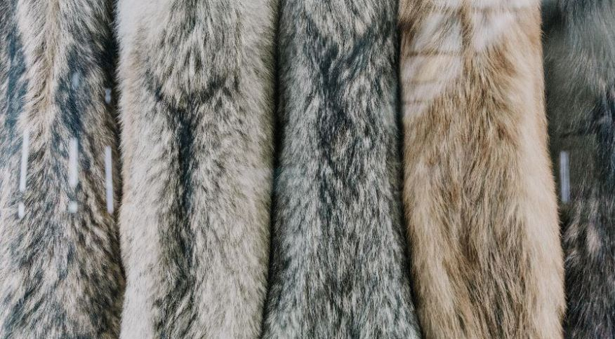 A reação mais recente do setor da moda a preocupações com o tratamento de animais e o meio ambiente