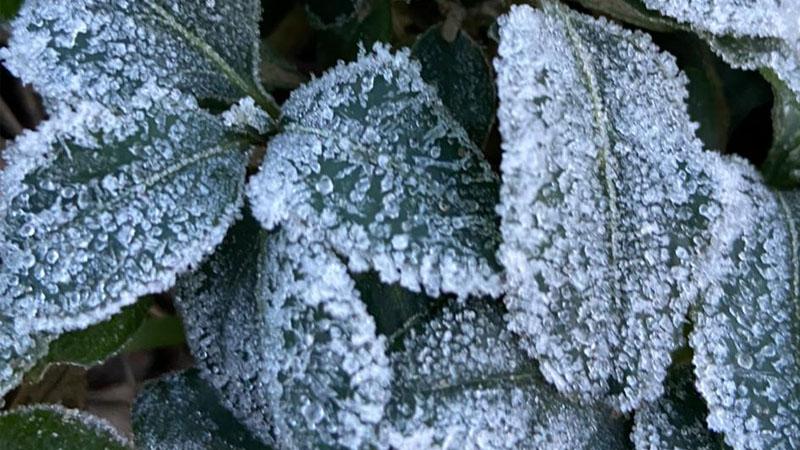 Madrugada fria deixou cidades em MG cobertas de gelo