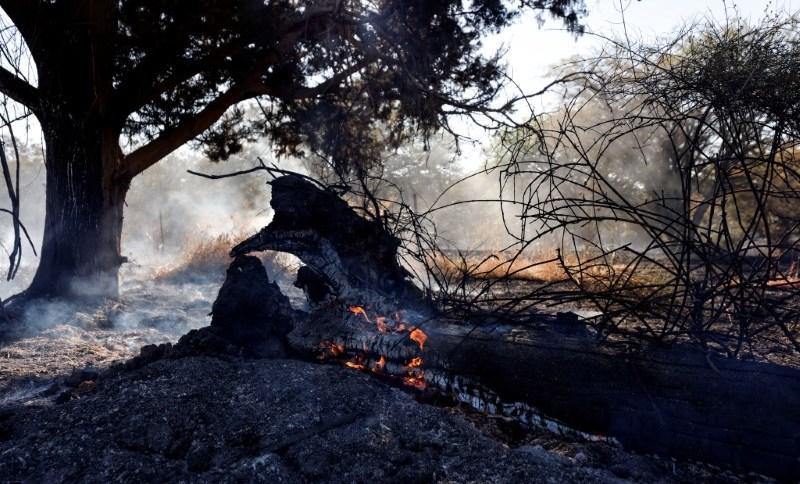 Árvore em chamas após palestinos em Gaza lançaram balões incendiários sobre a fronteira com Israel