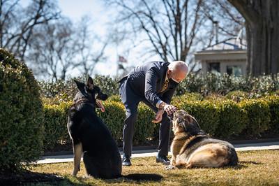 O presidente dos EUA, Joe Biden, brinca com os cães da família, Champ (em quem ele faz carinho) e Major, em fevereiro de 2021, na Casa Branca